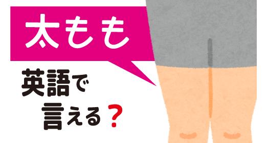 【太もも】は英語で何て言う?