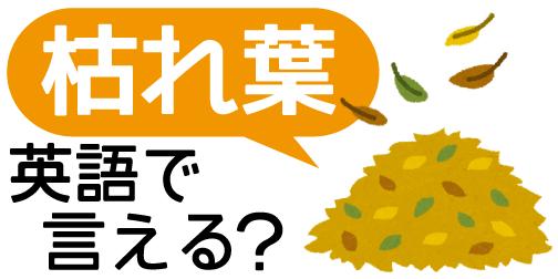 【枯れ葉】は英語で何て言う?