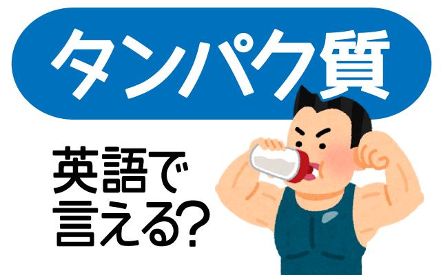 【タンパク質】は英語で何て言う?
