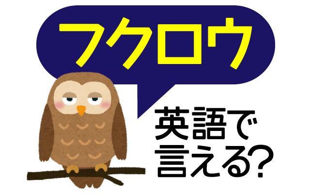 【フクロウ】は英語で何て言う?