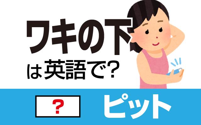 【ワキの下】って英語で何て言う?