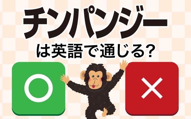 動物の英語【チンパンジー】は英語で通じる?