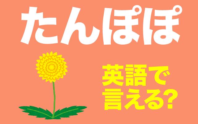 春の花【たんぽぽ】は英語で何て言う?
