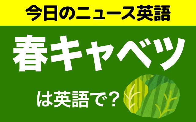 季節の食べ物【春キャベツ】は英語で?