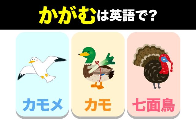 英語で【かがむ】を表現する時に使う鳥は?