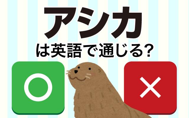水族館の人気者【アシカ】は英語で通じる?
