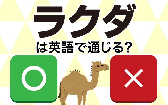 暑さに強い【ラクダ】って英語で通じる?