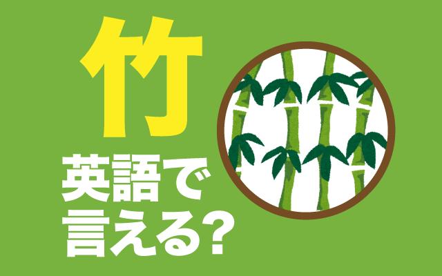 植物の英語【竹】は英語で何て言う?