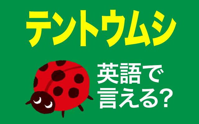 春に見かける【テントウムシ】って英語で言える?
