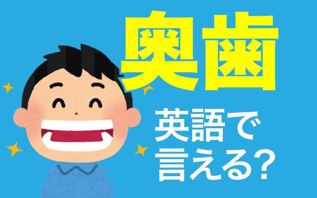 一番奥にある歯【奥歯】は英語で何て言う?