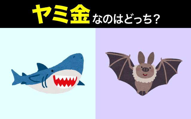 英語で【ヤミ金】の表現に使われるのはサメ?コウモリ?