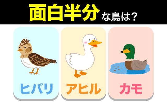 英語で【面白半分】の表現に使われる動物は?