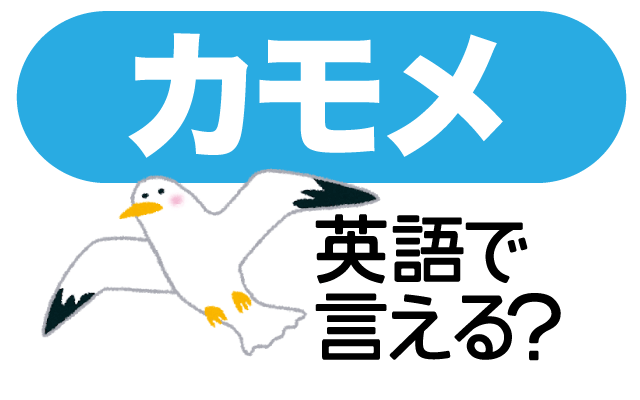 海の鳥【カモメ】は英語で何て言う?