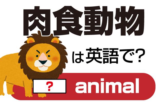 ライオンなどの肉を食べる【肉食動物】は英語で何て言う?