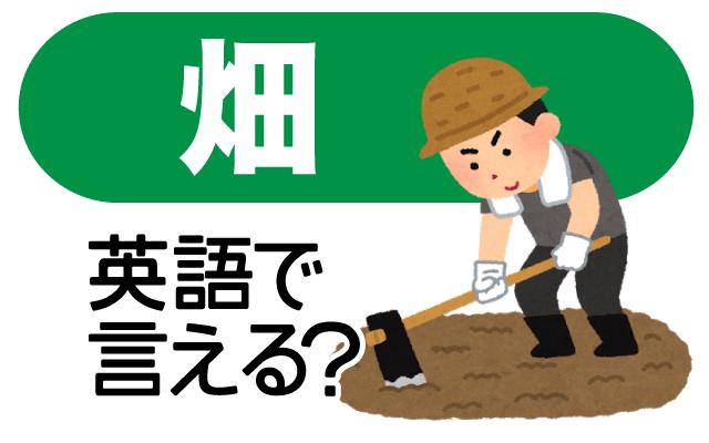 野菜や穀物を育てる【畑】は英語で何て言う?