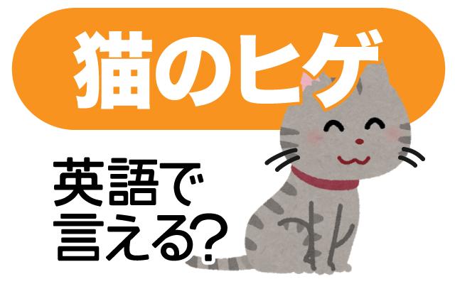 ネコちゃんに付いている【猫のヒゲ】は英語で何て言う?