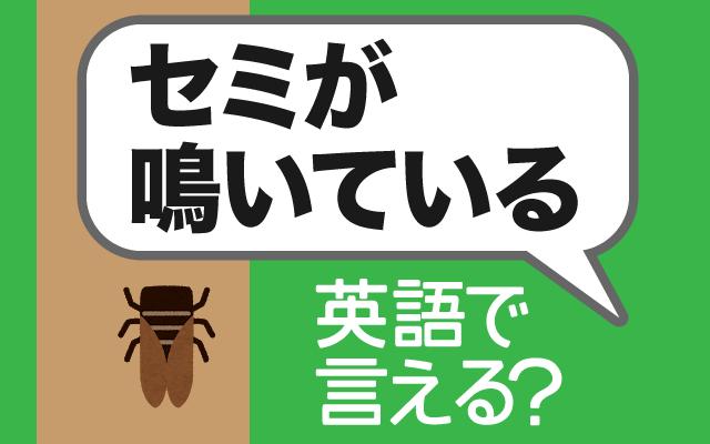 夏の風物詩【セミが鳴いている】は英語で何て言う?