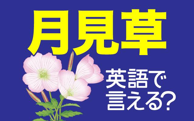 夏の夜に一晩だけ咲く【月見草】は英語で何て言う?
