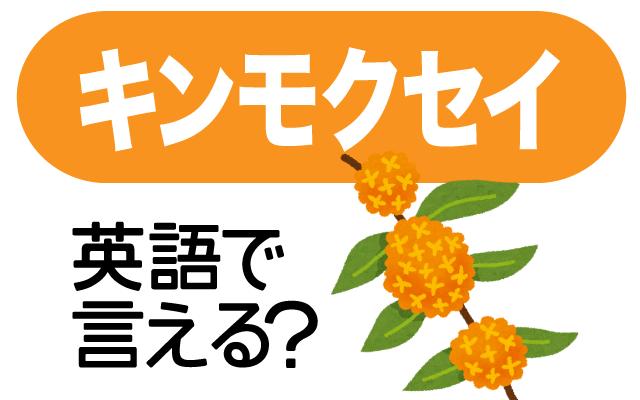 秋に甘い香りを漂わせる【金木犀(キンモクセイ)】は英語で何て言う?