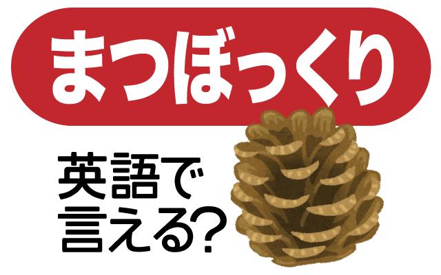 松の木から落ちてくる【松ぼっくり】は英語で何て言う?