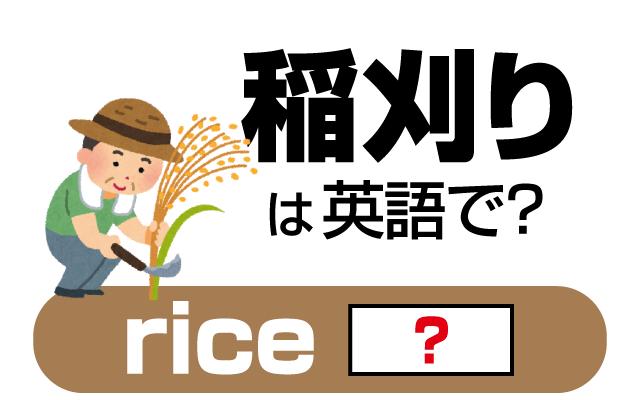 お米の収穫を意味する【稲刈り】は英語で何て言う?