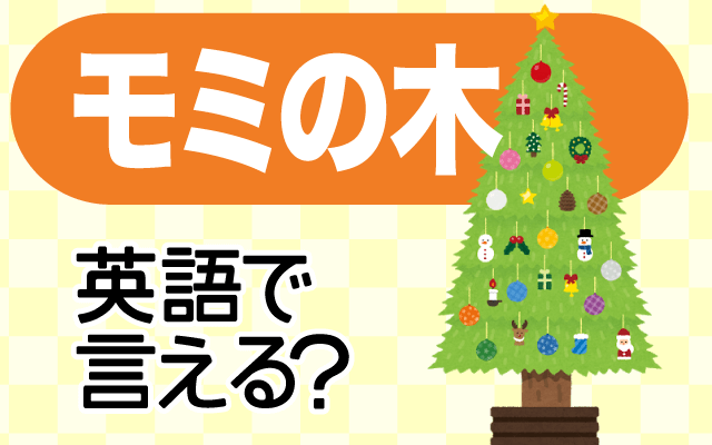 クリスマスツリーに使う【モミの木】は英語で何て言う?