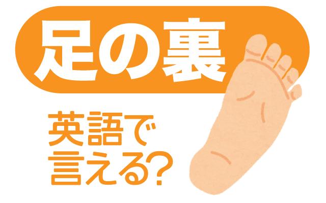 地面に触れる【足の裏】は英語で何て言う?