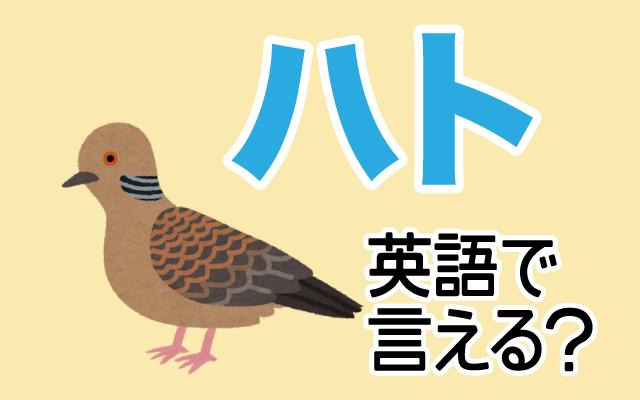 公園でよく見る【ハト】は英語で何て言う?