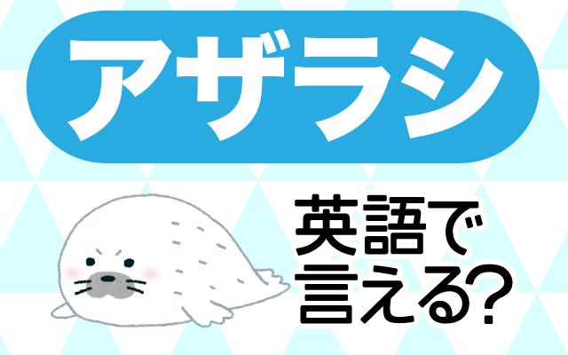 水族館の人気者【アザラシ】は英語で何て言う?