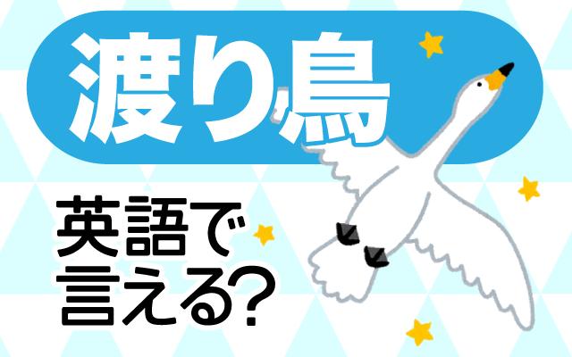 季節で移り住む【渡り鳥】は英語で何て言う?