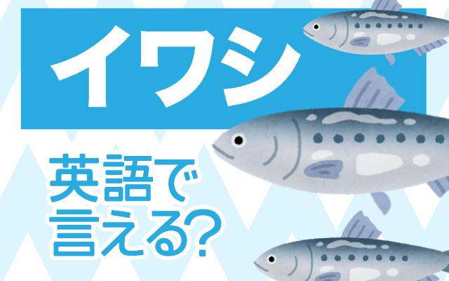 魚の【イワシ(鰯)】は英語で何て言う?