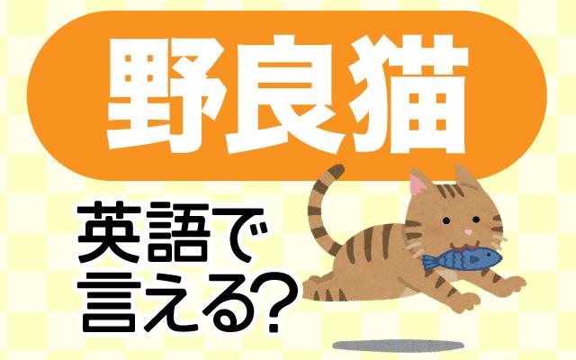飼われていない【野良猫】は英語で何て言う?