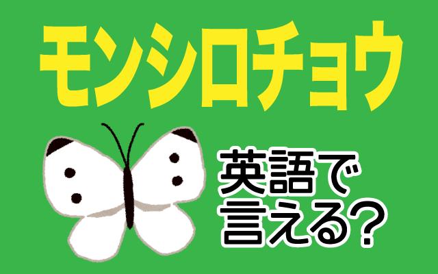 白い蝶【モンシロチョウ】は英語で何て言う?
