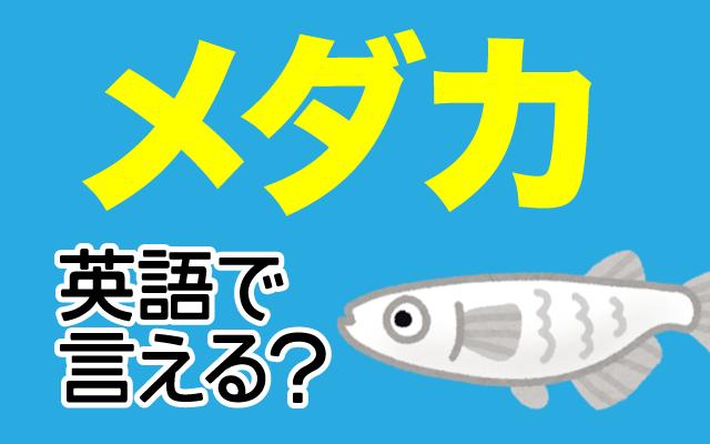飼っている人も多い【メダカ】は英語で何て言う?