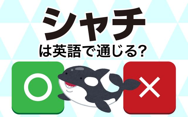 【シャチ】は英語で通じる?通じない和製英語?