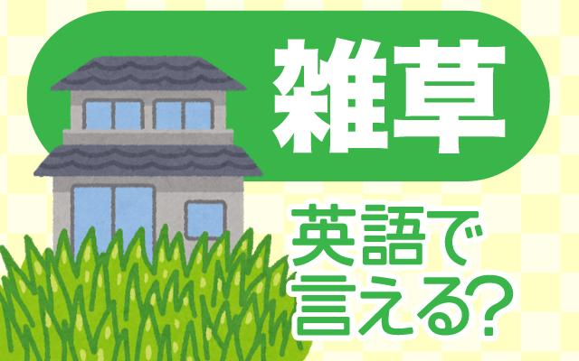 庭に生える【雑草】は英語で何て言う?