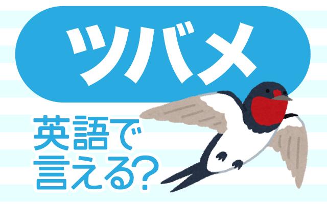 家の軒下などに巣を作る【ツバメ】は英語で何て言う?