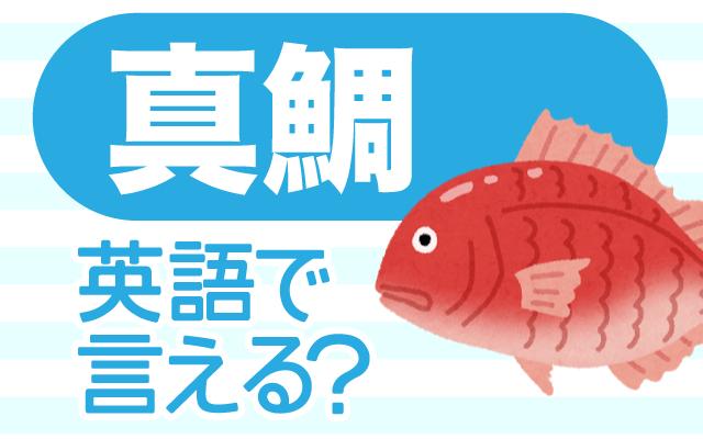 刺身や煮付けなどに使う【真鯛】は英語で何て言う?