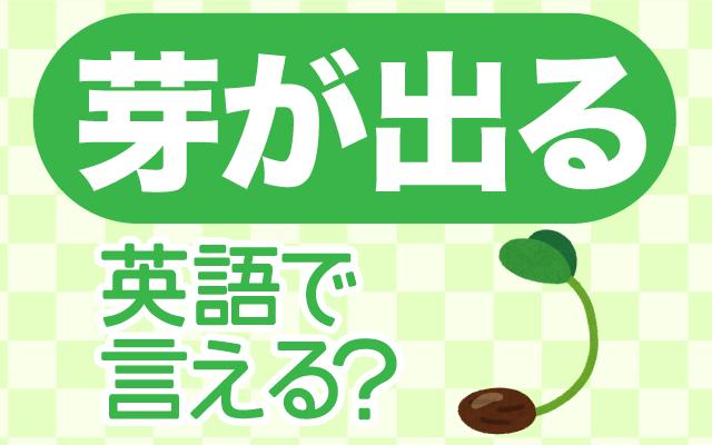 野菜や植物などの【芽が出る】は英語で何て言う?
