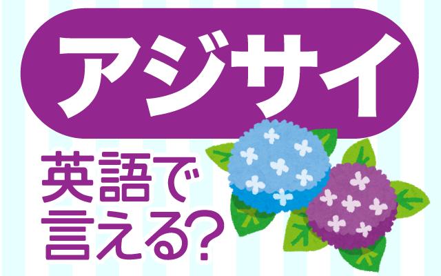 梅雨に咲く【紫陽花(アジサイ)】は英語で何て言う?