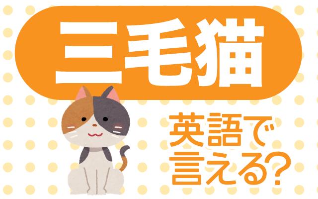 白・茶・黒色の猫【三毛猫】は英語で何て言う?