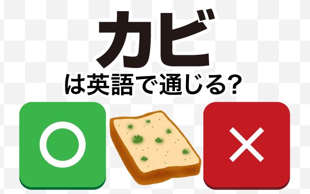 【カビ】は英語で通じる?通じない和製英語?