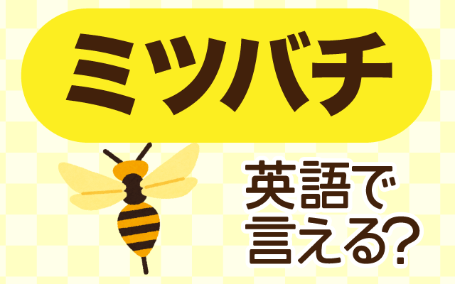 花の蜜を集める【ミツバチ】は英語で何て言う?