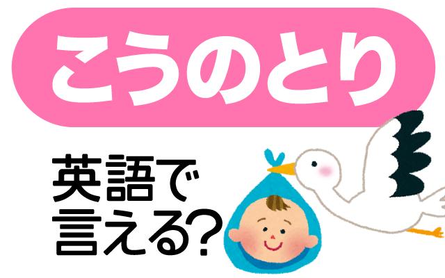 赤ちゃんを運ぶ鳥【コウノトリ】は英語で何て言う?
