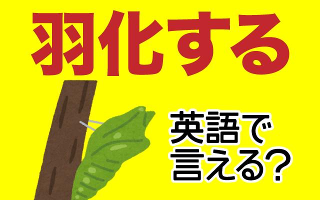 虫が蛹から【羽化する】は英語で何て言う?