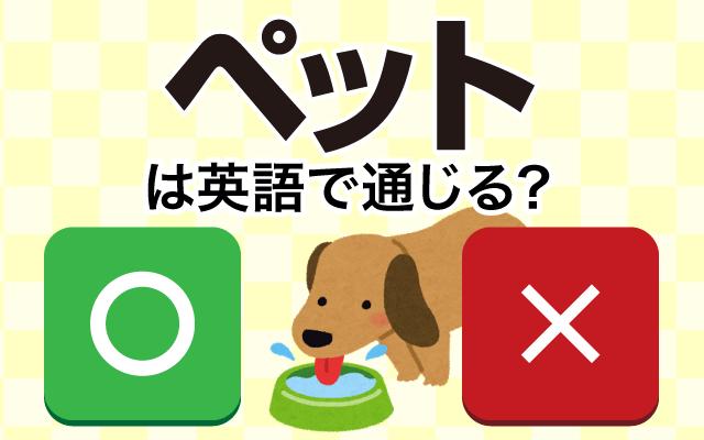 【ペット】は英語で通じる?通じない和製英語?