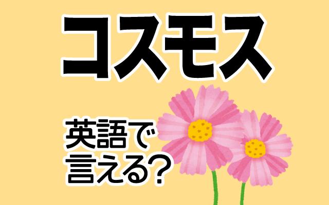 【コスモス】は英語で通じる?通じない和製英語?