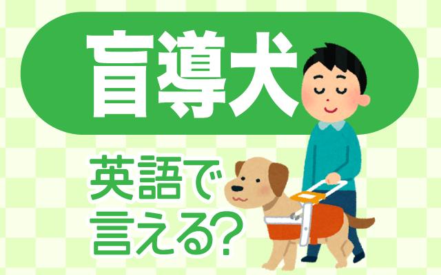 目が不自由な人を補助する【盲導犬】は英語で何て言う?