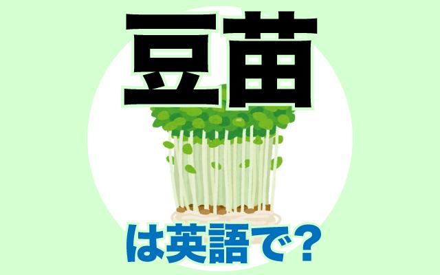 野菜の【豆苗】は英語で何て言う?